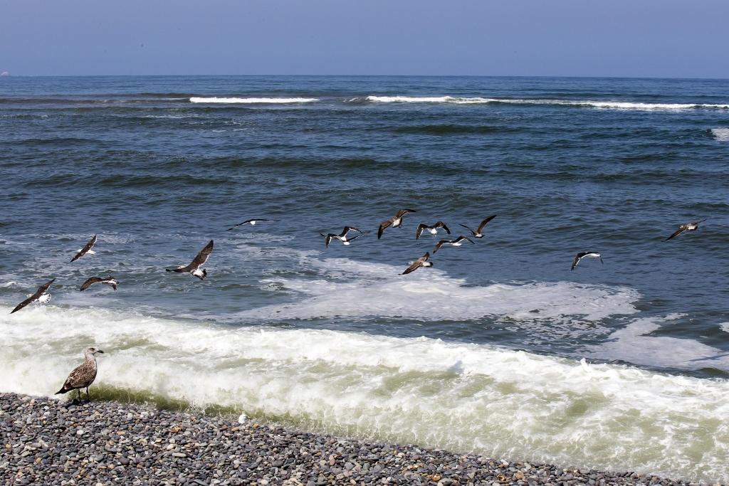 impacto ambiental en cuarentena