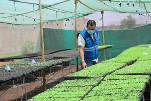 plantinera de hortalizas